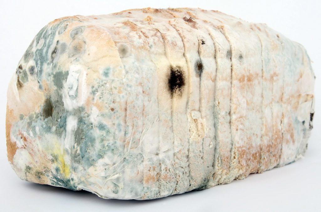 hleb-plesen