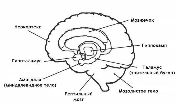 mozg01