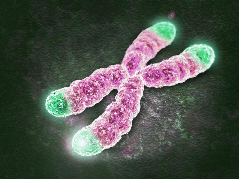 hromosomi-telomeri