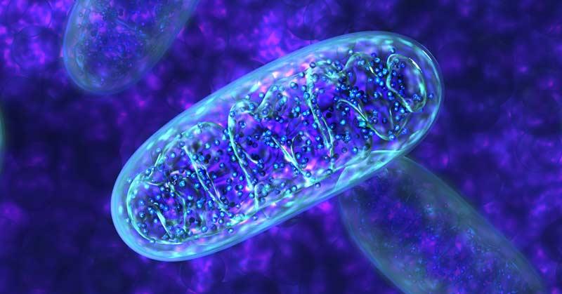 mitohondrii01